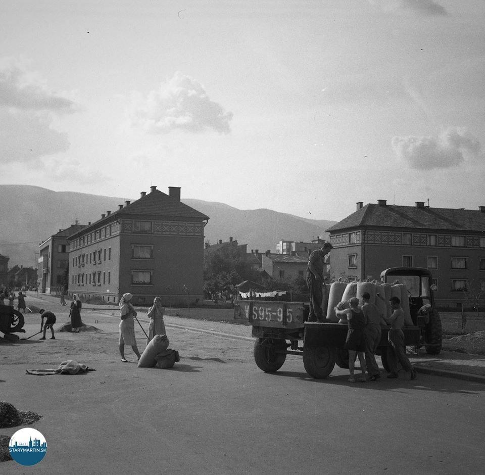 19.8.1955 - Obilie od kombajnov, ktoré pracujú na najvzdialenejších miestach, privážajú autá i traktory na blízku asfaltovú ulicu. Družstevníci obilie za pomoci brigádnikov dosušujú. Po prehadzovaní a čistení obilia odvážajú do výkupného závodu.