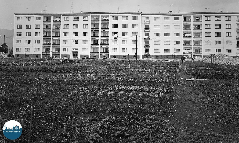 Obyvatelia nového obytného bloku v Martine využili pôdu medzi jednotlivými blokmi nového sídliska na pestvanie zeleniny